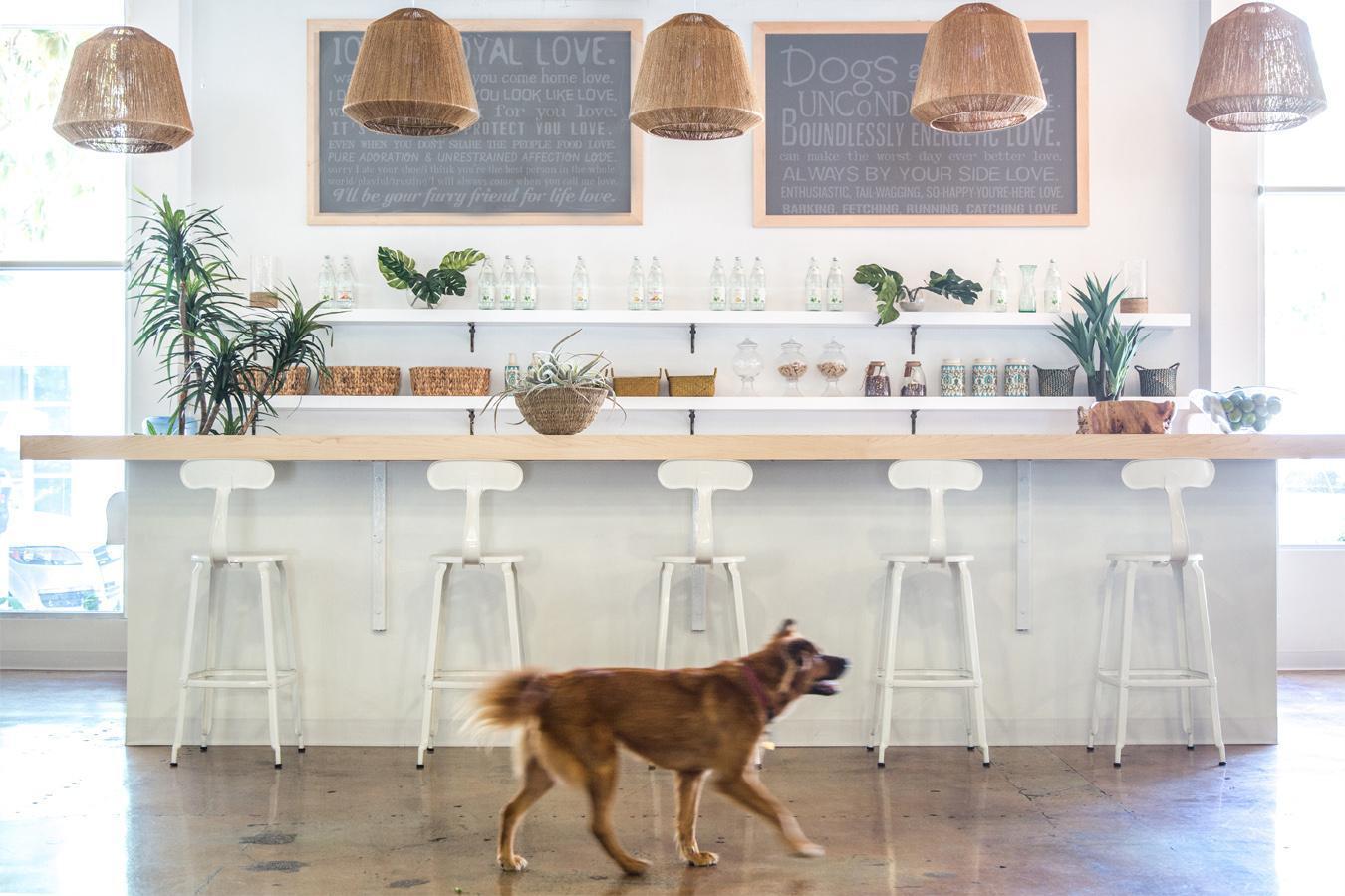 DogVacay's Santa Monica Offices