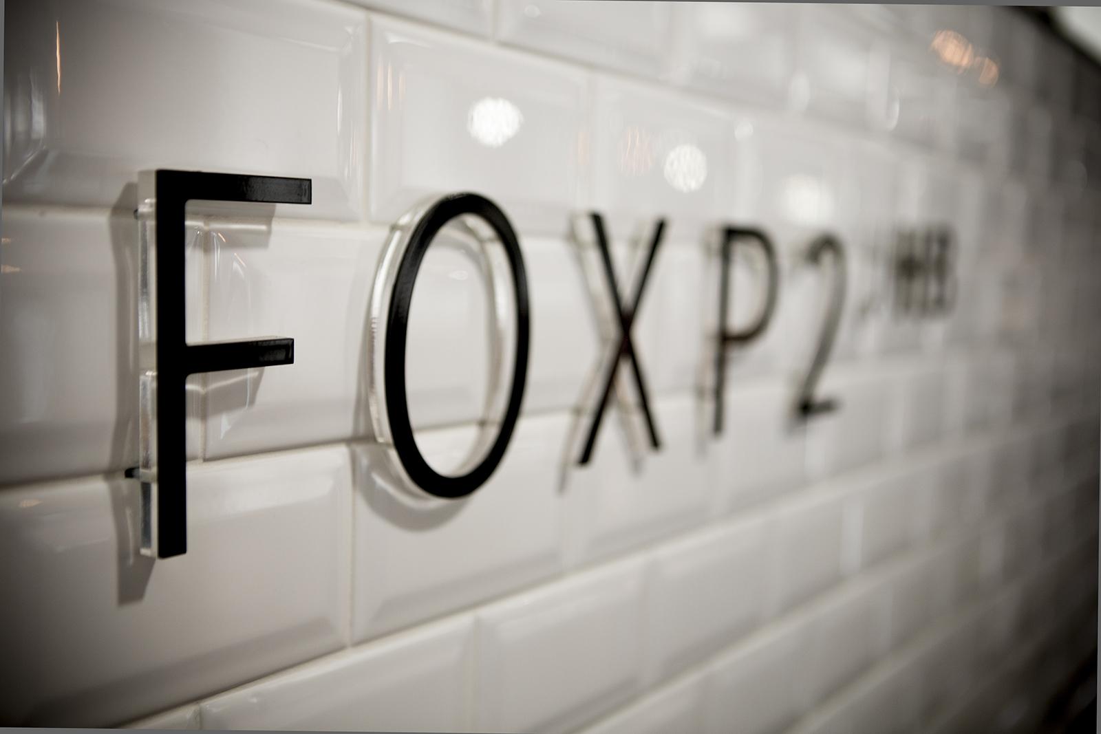 fox-p2-2