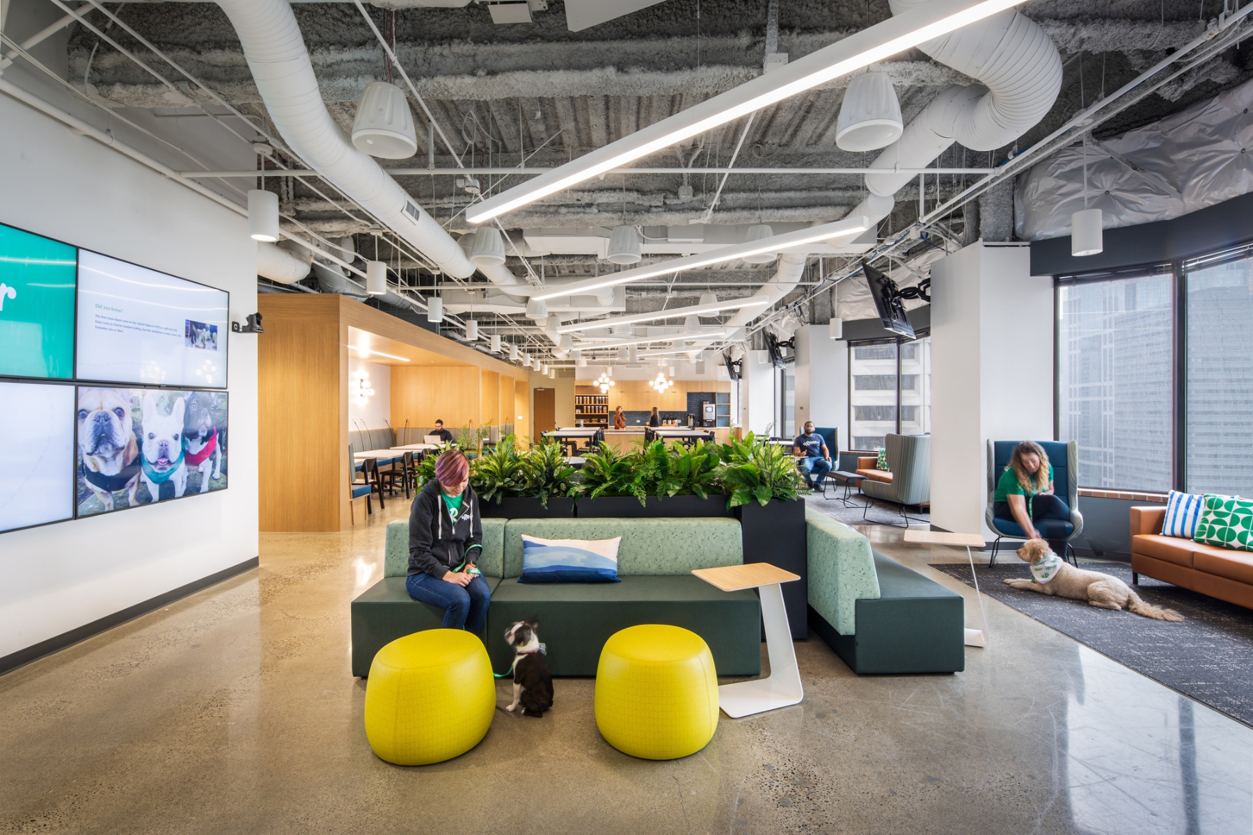 rover-offices-seattle-8